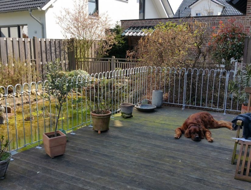 Der Hund liegt auf der umzäunten Terrasse, im Hintergrund die Tür.