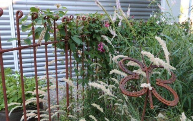 La clôture est merveilleusement pour aider à grimper les Clematis !