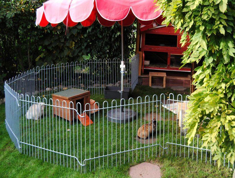 Clôture galvanisée pour petits animaux rabbit comme enclos à lapins.