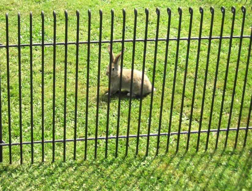 La distance entre les barreaux de la clôture n'est que de 4,3 cm.