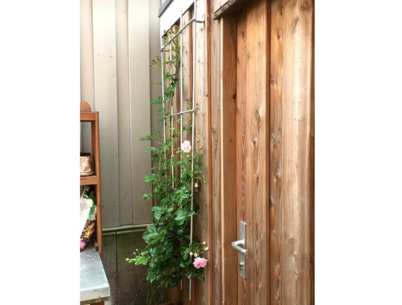 Klettergerüst aus verzinktem Metall für Rosen an der Wand geschraubt.