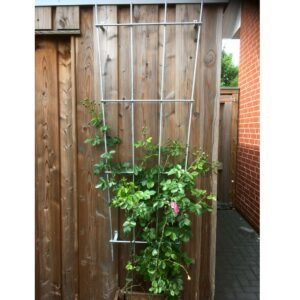 Die Rosenranke wächst an einem verzinkten Eisengestell am Gartenhaus