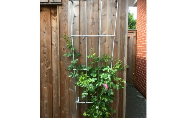 Die Rosenranken wachsen am Gartenhaus