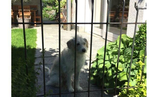 Selbst gebogener Zaun mit Hund