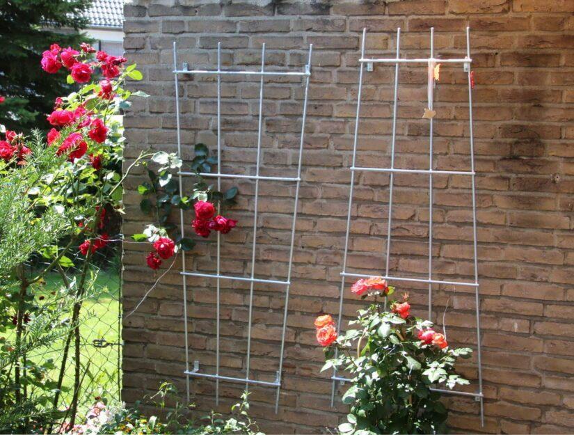 An der Wand geschraubte Gitter zum beranken mit roten Rosen.