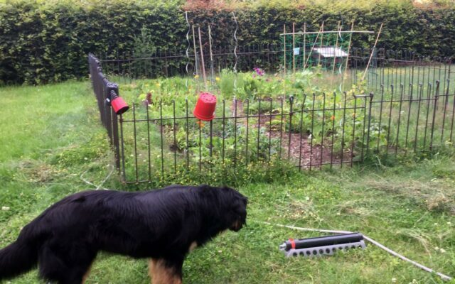 Zaun zum Schutz vor neugierigen Hundenasen