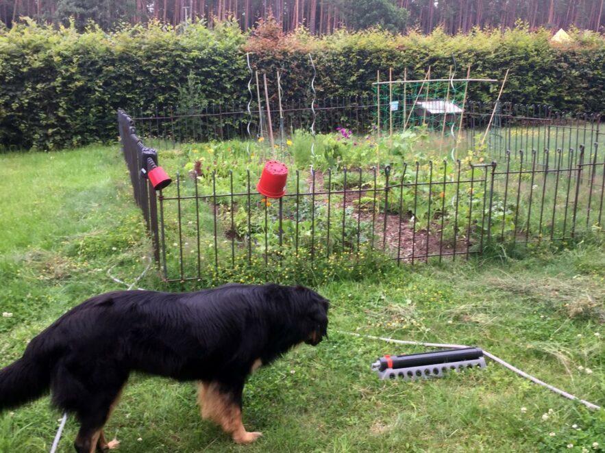Kinderleichte Montage für einen Garten im Garten, zum Schutz vor neugierigen Hundenasen.
