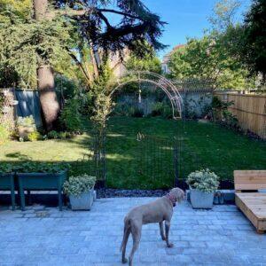 Le chien se tient devant l'arche du jardin avec un portail