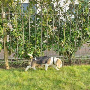 Zaun aus Metall für einen Beagle Welpen