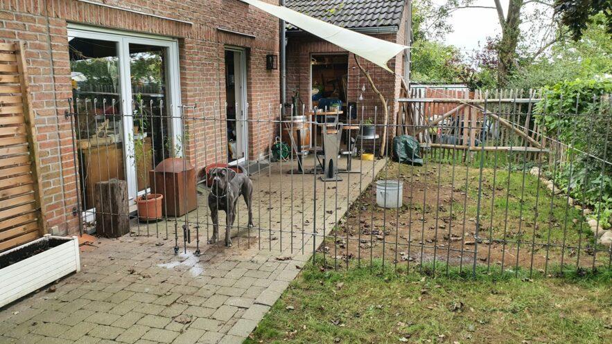 Was denkt der Hund über den neuen Zaun aus Metall?