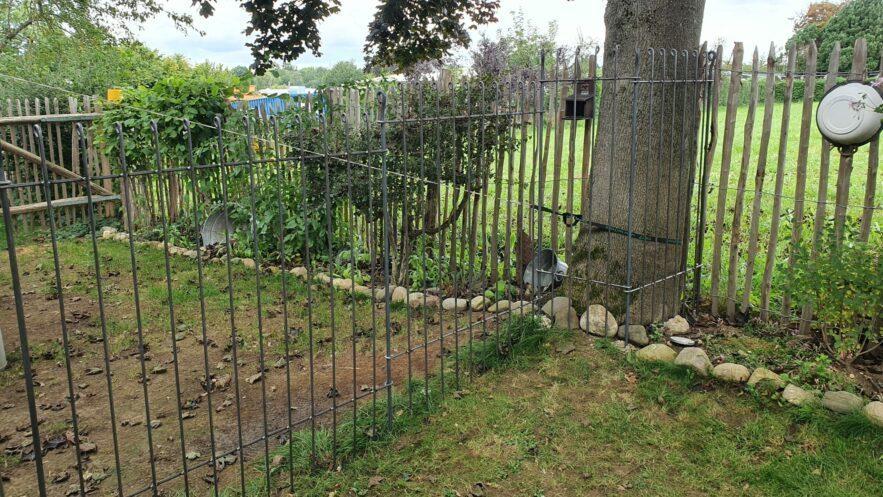 Der Steckzaun ist um den Baum gesteckt und stößt an der Grundstücksgrenze mit dem Staketenzaun zusammen
