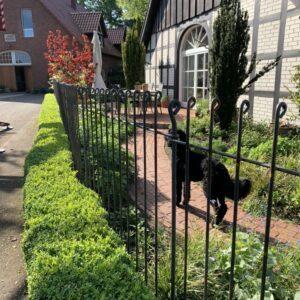 Hundezaun aus Stahl hinter der Hecke vor dem Haus aufgestellt