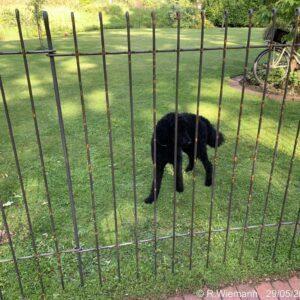 Der Zaun passt hier ganz gut zu unserem Haus, wir finden ihn super!