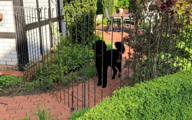 Hundezaun um Haus und Garten