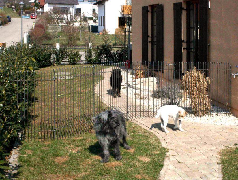 Die Hunde bleiben getrennt. Der Zaun in roh wird eine Rostpatina ansetzen.