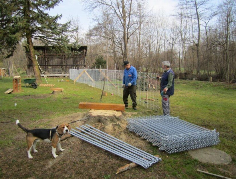 Aufbau vom verzinkten Hundezaun - der Beagle schaut zu.
