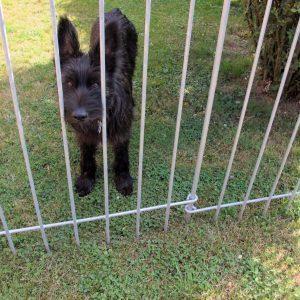Clôture pour jardin en métal galvanisée pour notre chien