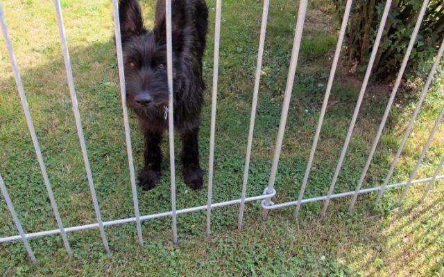 Clôture avec porte pour un chien