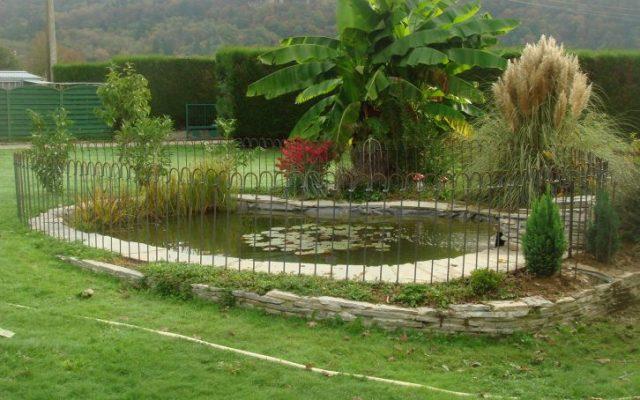 Teich mit Palme und Zaun