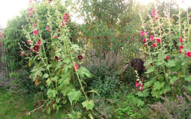 """Unseren Garten gegen """"Ausbruch"""" unserer Hunde zu sichern"""