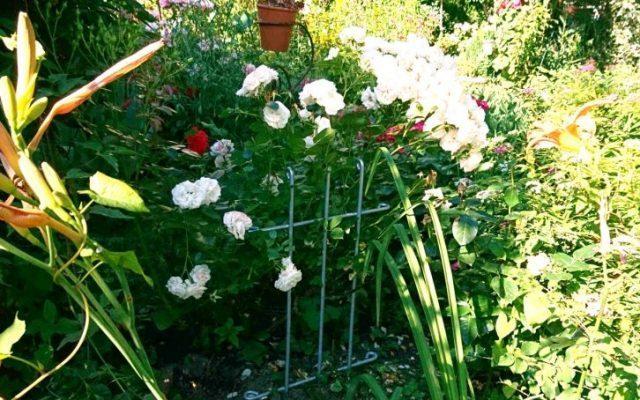 Steckzaun als Rankgitter & Pflanzstütze (Blumen-, Lilien-, Rosenstütze, …)