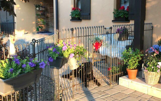 Der Zaun hält unsere Hunde auseinander