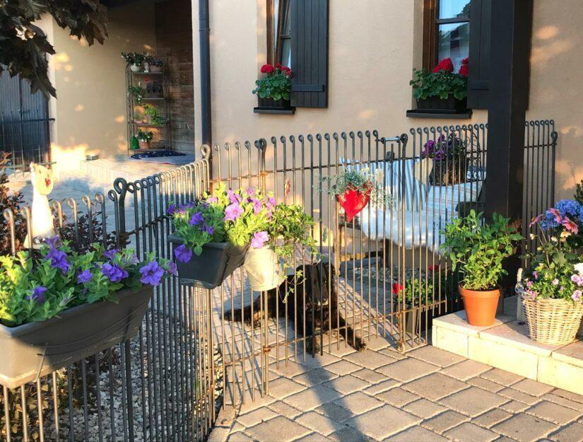 Der Hund liegt vor dem Steckzaun Tor engmaschig 115 cm hoch roh (darf rosten).