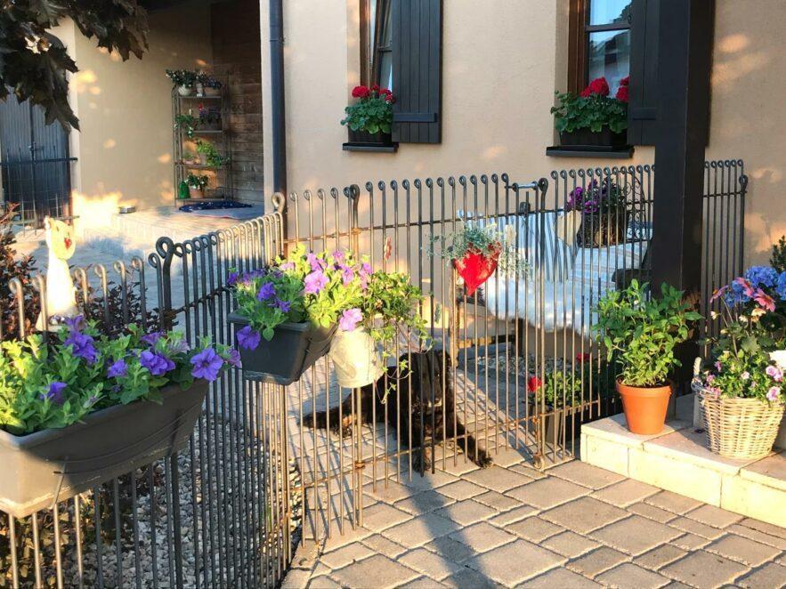 Der Zaun hält unsere Hunde auseinander, die nicht so gut miteinander können.
