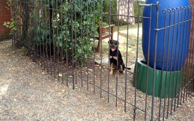 Hundezaun in Eupen aufgebaut