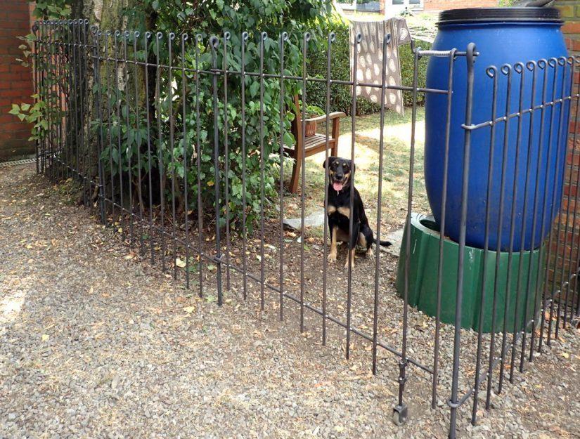 Tür anneau-115-roh mit Bodenrolle - der Hund bleibt im Garten.