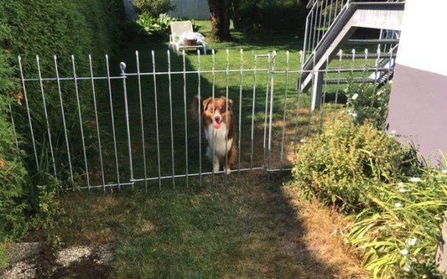 Hundezaun: die Praxistauglichkeit bewerten wir mit sehr gut