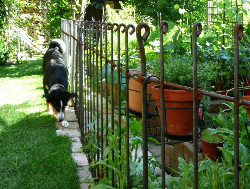Mit demHundezaun anneau bleiben Personen und Tiere auf der richtigen Seite Ihres Grundstücks.