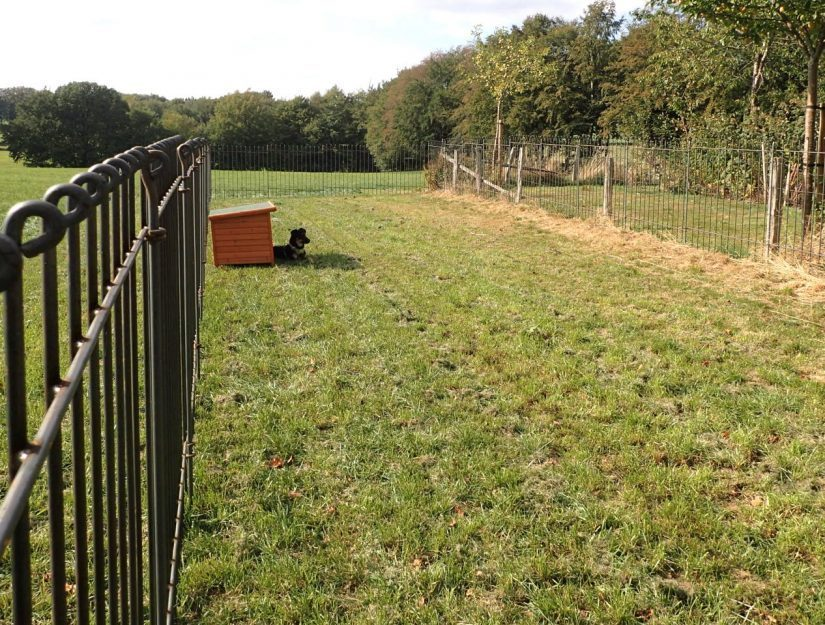 Enclos à chiens autonome dans une prairie.