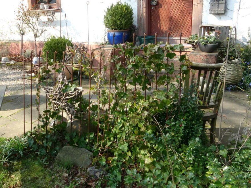 Mit Efeu bewachsenes Zaun-Gitter im Garten
