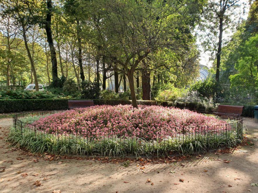 Grille de protection pour les fleurs dans un grand parc