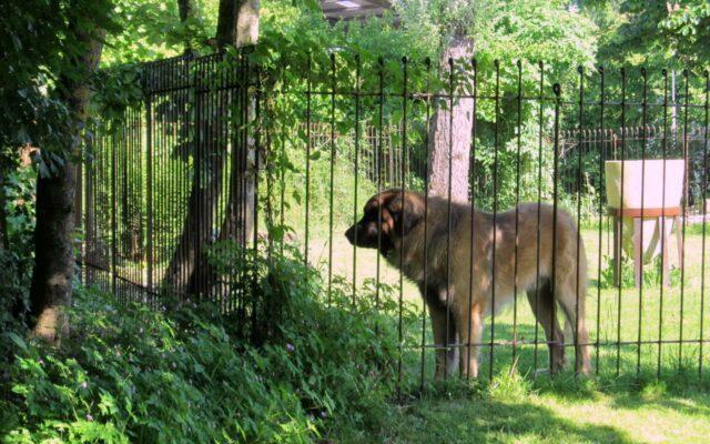 Séparation dans un jardin pour un gros chien
