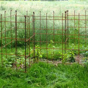 Himbeer-Spalier die Pflanzen können wachsen