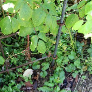 Der Verbindungsstab wird am Ende im Garten-Boden eingesteckt