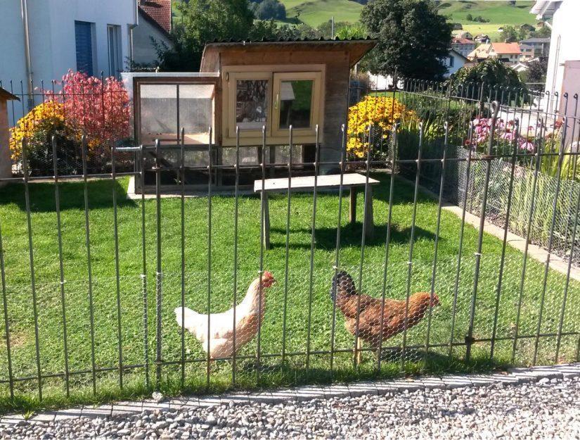 Mit einem zusätzlichen Drahtnetz ein stabiles Hühnergehege.