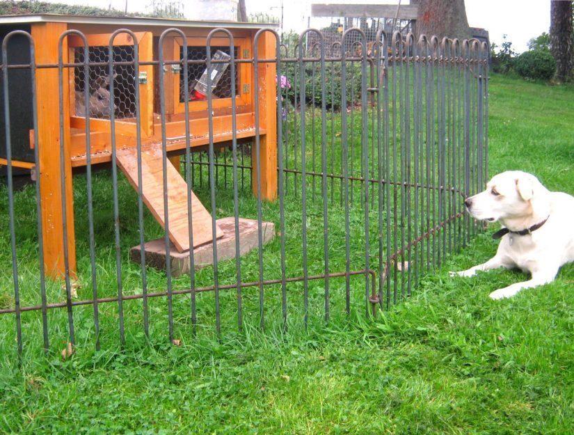 Hase und Hund sind durch den Zaun getrennt.