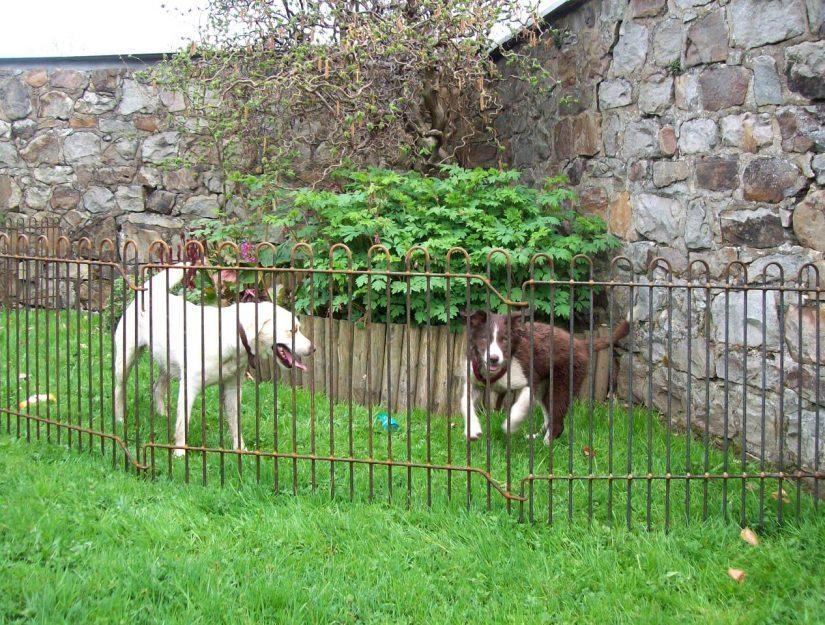 Hundeauslauf mit den rabbit-Gittern in einer Ecke im Garten.