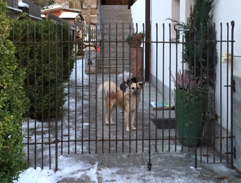 anneau-engmaschig-145-roh (darf rosten) Tür mit Bodenrolle.