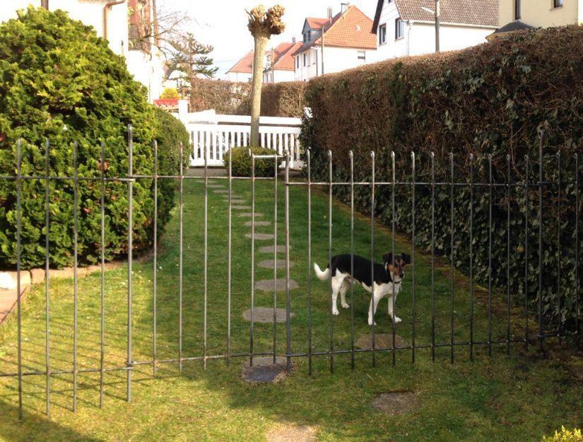 Der Hund hat einen eingezäunten Bereich im Garten.