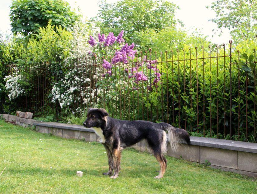 Der Hundezaun aus Stahl ist viele Jahrzehnte haltbar.