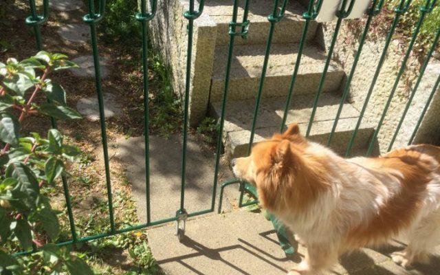 Grün gestrichener Hunde Zaun mit Tor auf Standfüßen im Garten aufgestellt