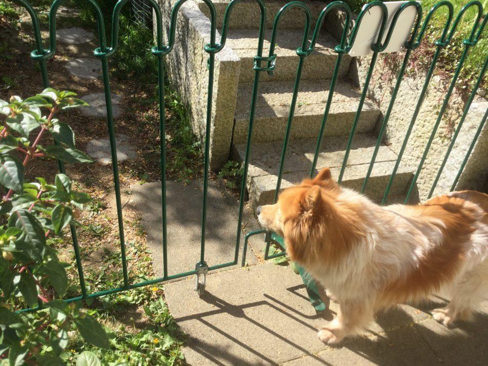 Grun Gestrichener Hunde Zaun Mit Tor Auf Standfussen Im Garten