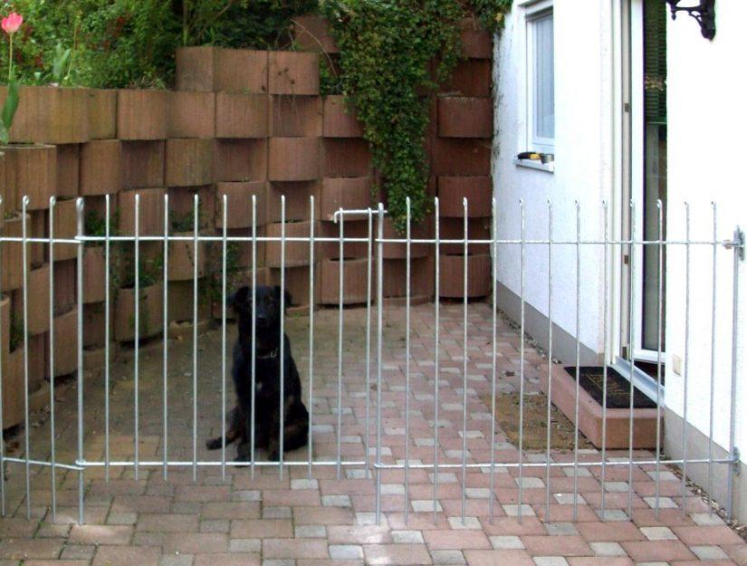 Der Hund sitzt auf der eingezäunten Terrasse und schaut durch den verzinkten Zaun.