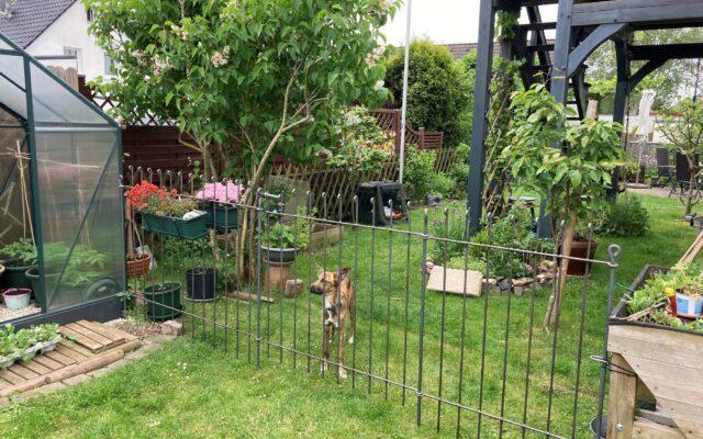 Gartentrennzaun für einen Hund