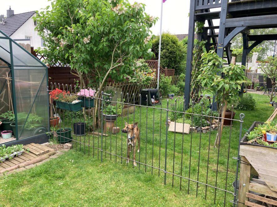 Hundezaun aus Eisen im Garten mit Blumen verschönert