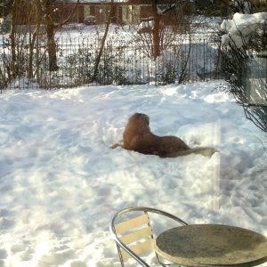 Der Hund liegt im verschneiten Garten vor dem Hundezaun